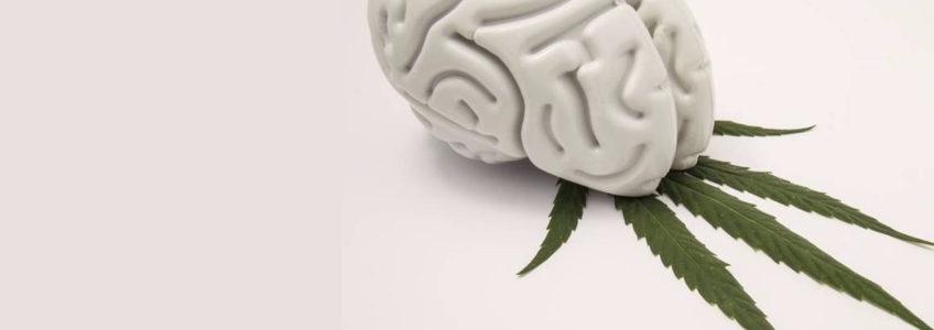 Cannabis Ansia e Panico Piscoterapeuta Milano Psicologa