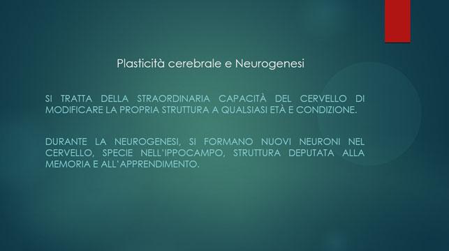 La plasticità cerebrale è la straordinaria capacità del cervello di modificare la propria struttura a qualsiasi età e condizione