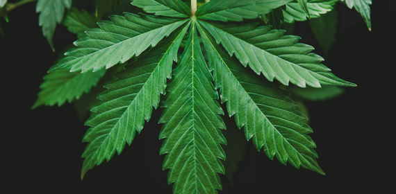 Caso clinico di cannabis e attacchi di panico