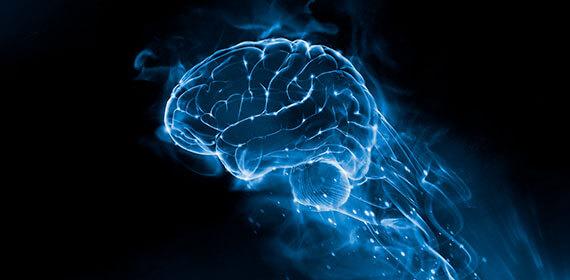 La neuroplasticità del cervello